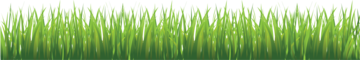 grass_PNG10855.png